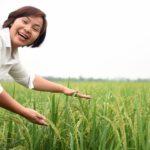 Lời hứa với lúa - Nguyễn Thị Thu