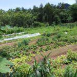 Nông nghiệp hữu cơ PGS